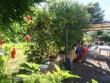 Immersa nel verde deliziosa proprietà con casa e terreno