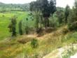 n° 2 lotti terreno agricolo edificabile a due passi dalla città